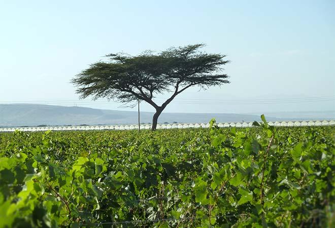 Création cave vinicole Groupe Castel à Ziway en Ethiopie vignoble bureau d'études vinicoles INGEVIN