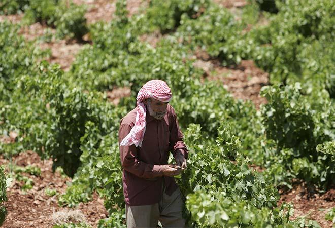 Restructuration Chai Kefraya viticulteur maitre d'oeuvre vinicole INGEVIN