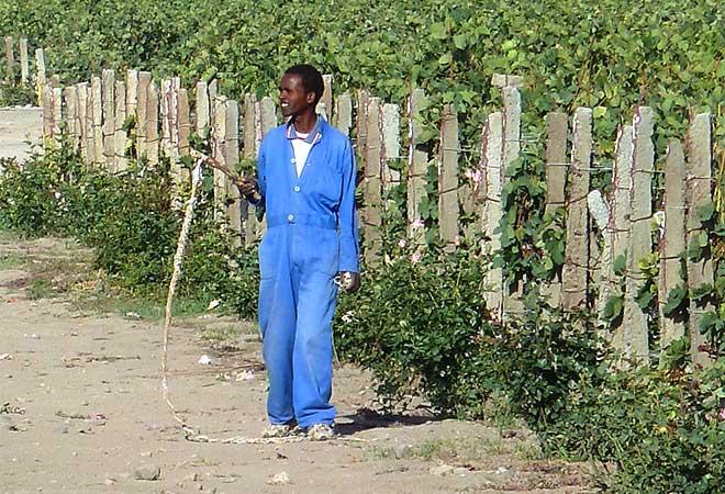 Création cave vinicole Groupe Castel à Ziway en Ethiopie viticulteur bureau d'études vinicoles INGEVIN